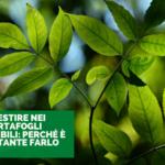 Investire nei portafogli sostenibili: perché è importante farlo